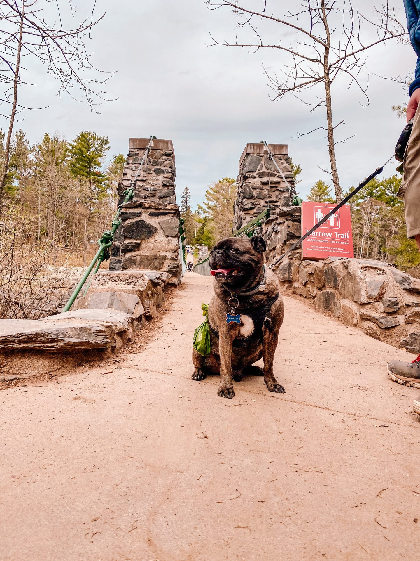 Dog sitting at the end of the swinging bridge at Jay Cooke State Park in Minnesota