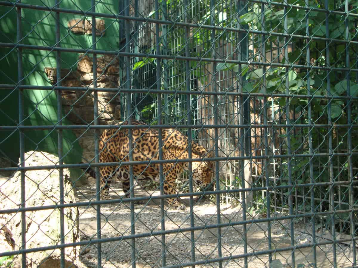 Zagreb Zoo Worth Visiting - 17 zoo animals happy see visitors