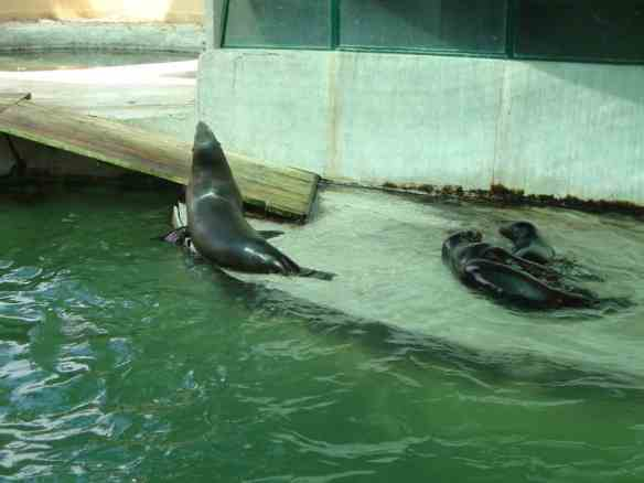 Seals at the Zagreb zoo