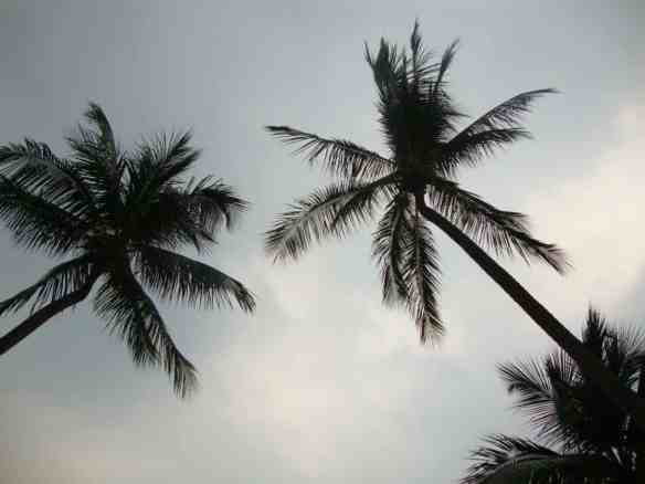 palm trees on Sentosa Island beach Singapore