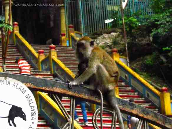 Batu Cave monkey with baby