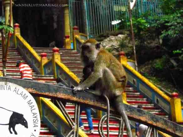 Batu Cave monkey with baby