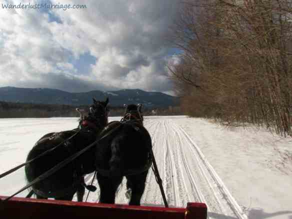 Horse and sleigh in the snow