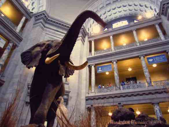 Entrance into the Natural History museum in DC