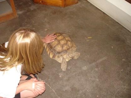 2-kara-and-tortoise