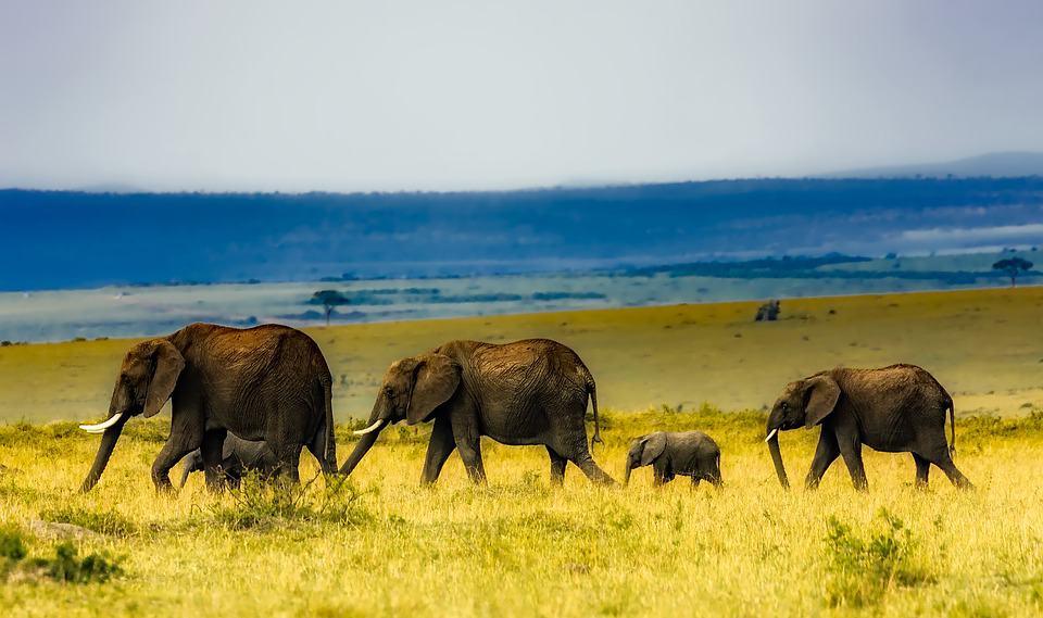africa-1903017_960_720