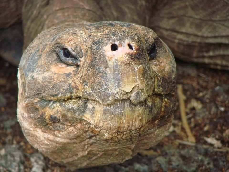 turtle-298407_960_720