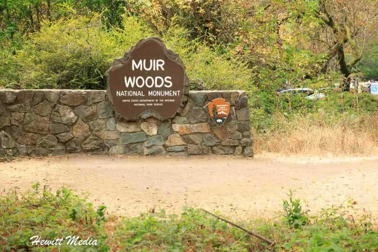 Muir Woods-4939