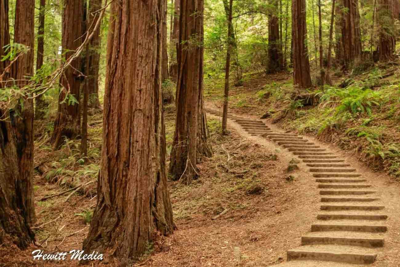 Muir Woods-4985