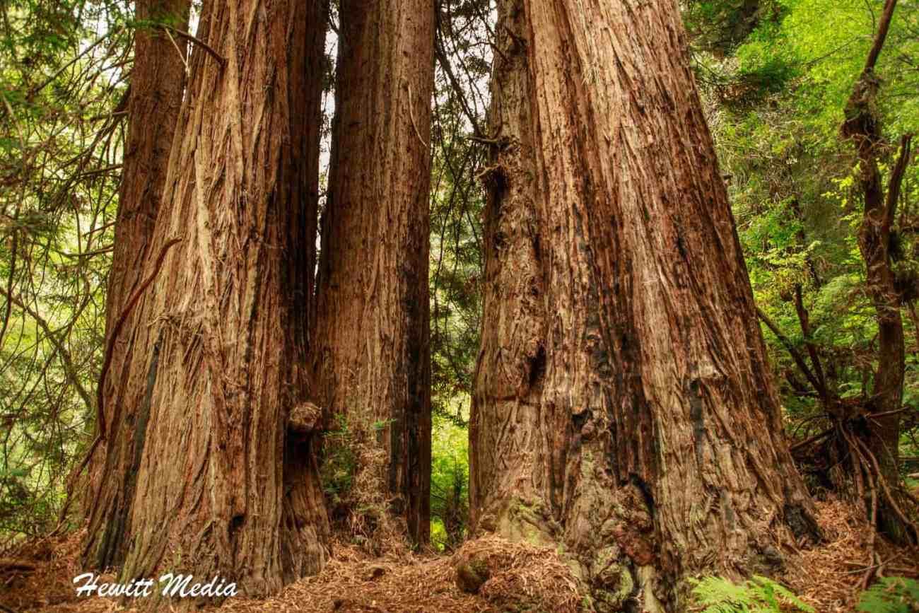 Muir Woods-5018