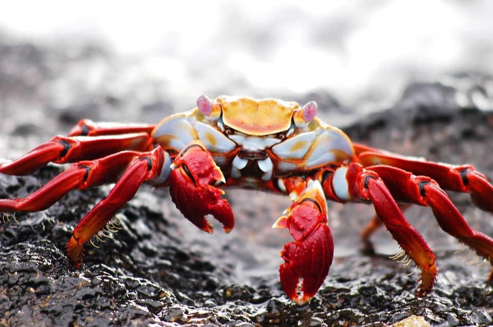 crab-2113968_960_720.jpg