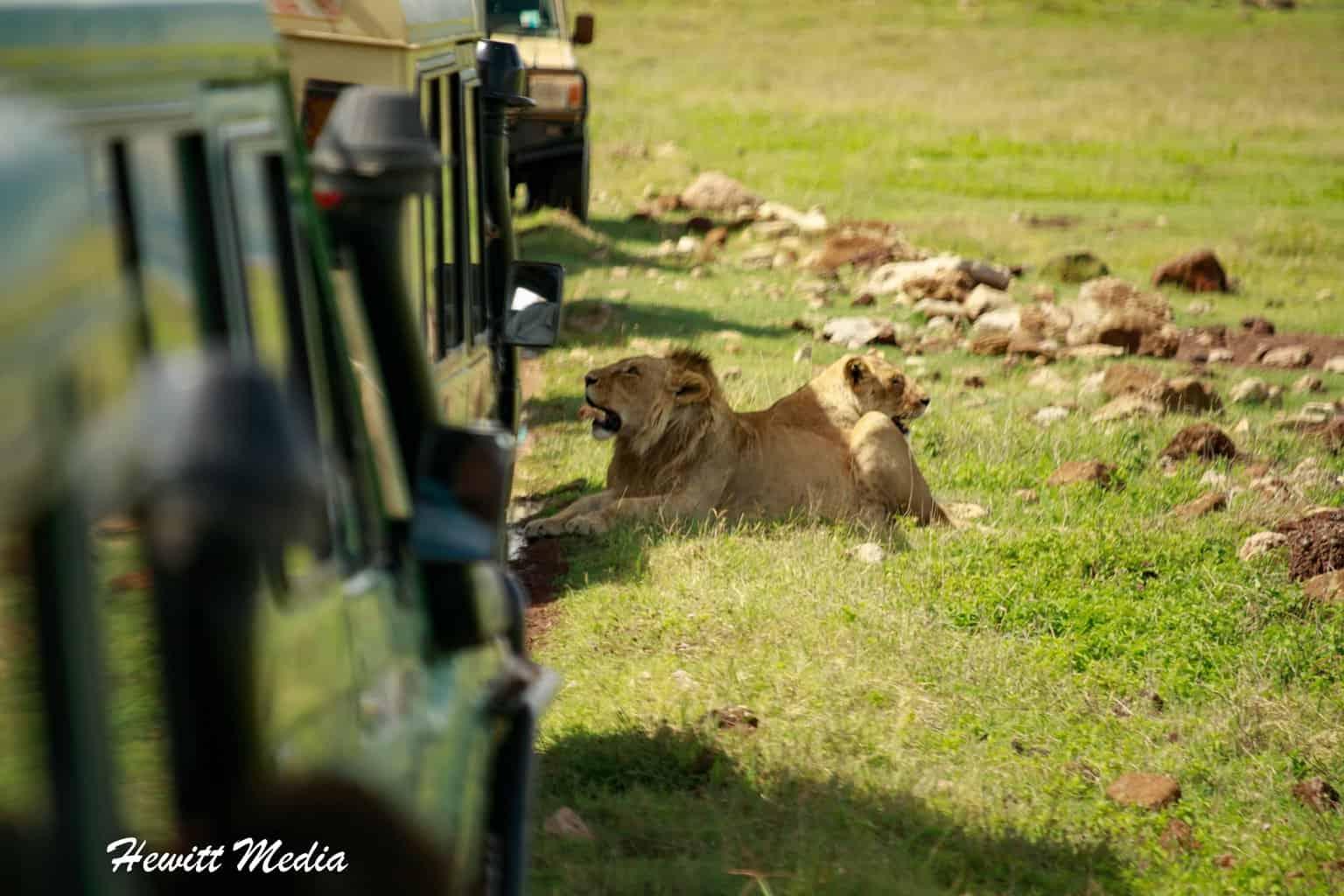 Tanzania Safari Itinerary Advice