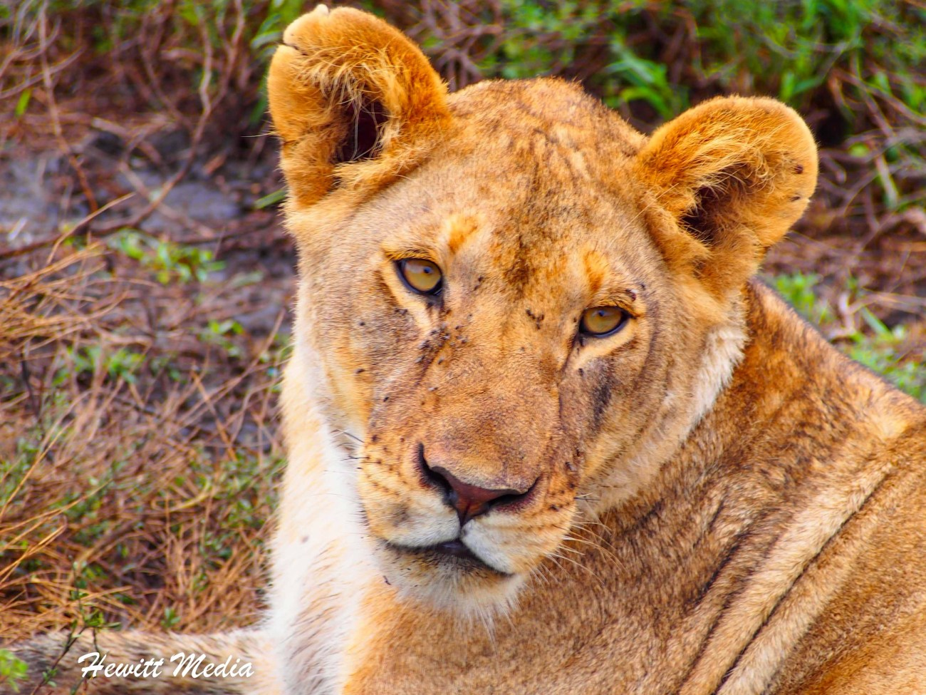 Safari Photography-1010517.jpg