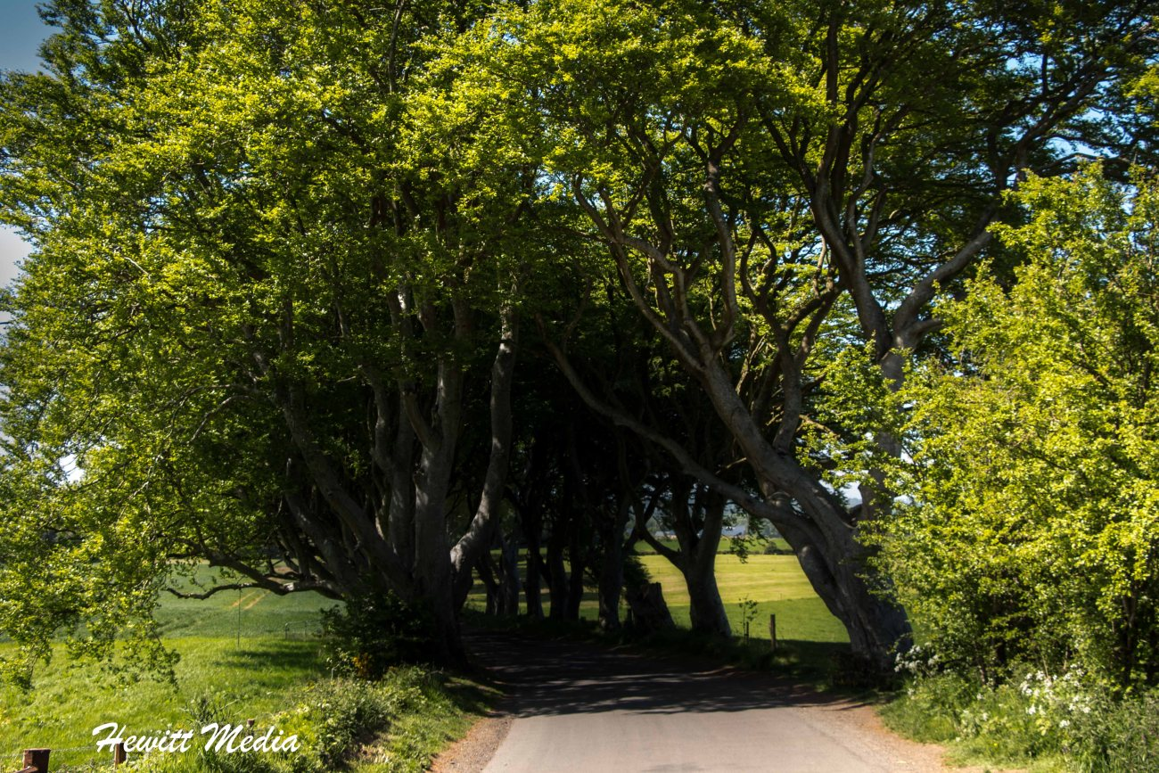 Dark Hedges-6986