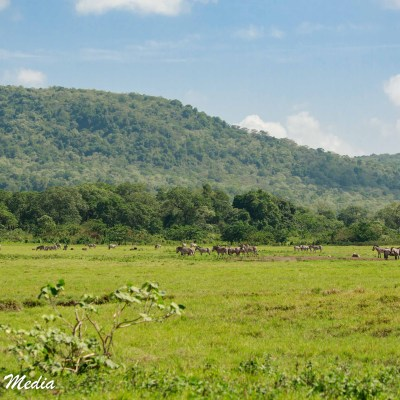 Buffalo in the distance while on walking safari