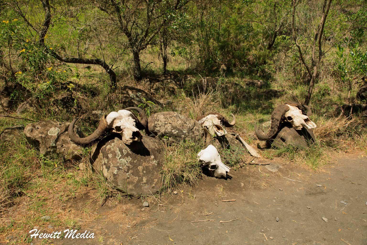 Animal skulls found in Arusha National Park