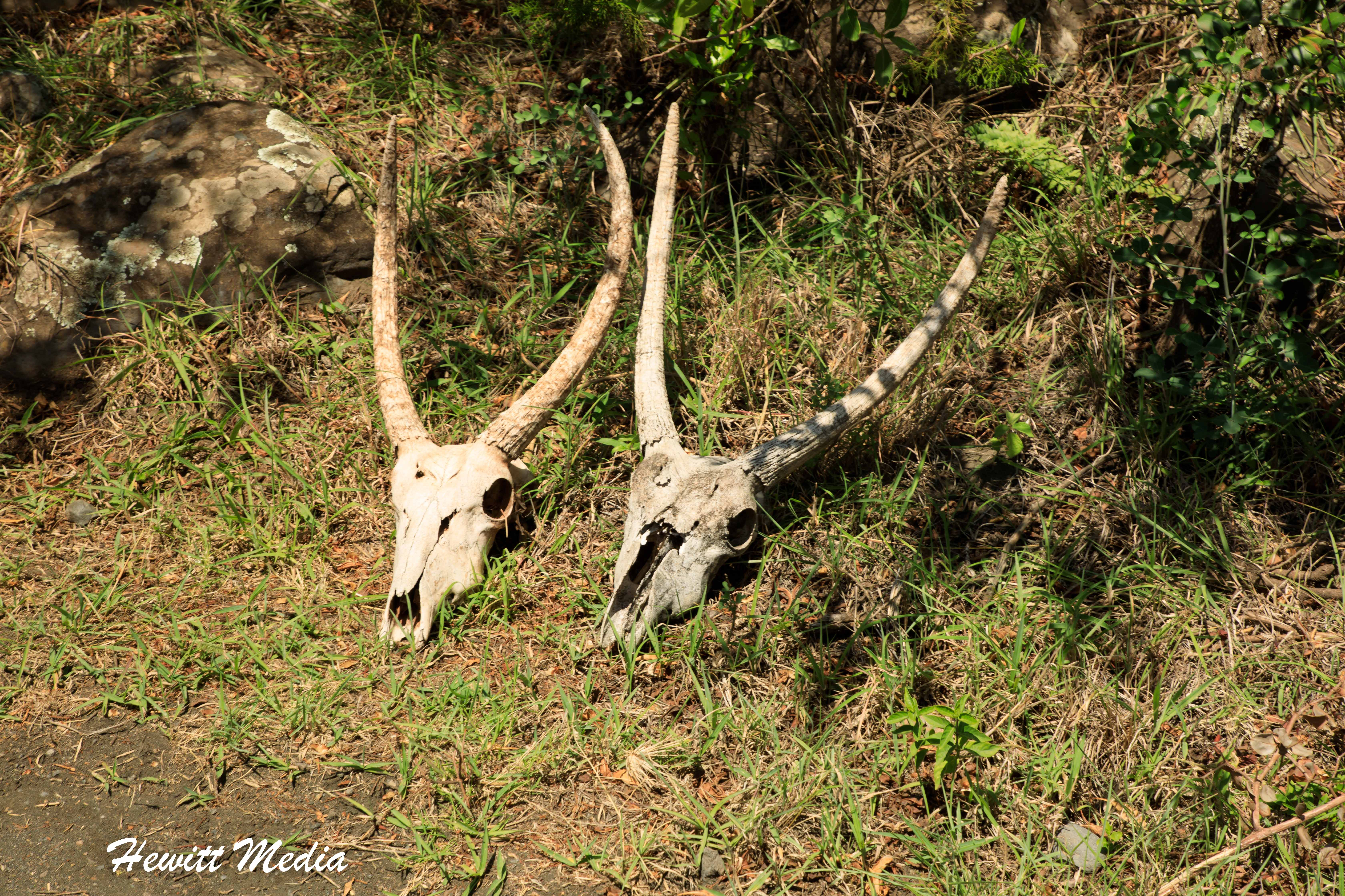 Animal skulls found in Arusha National Park