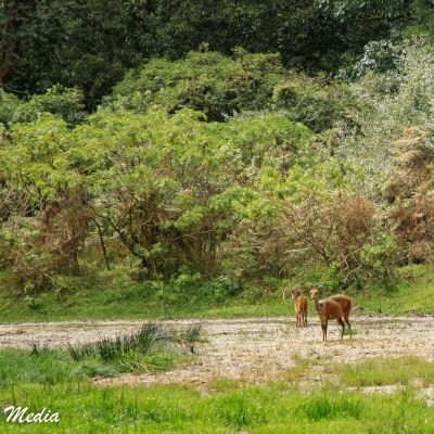 Wildlife inside Arusha National Park