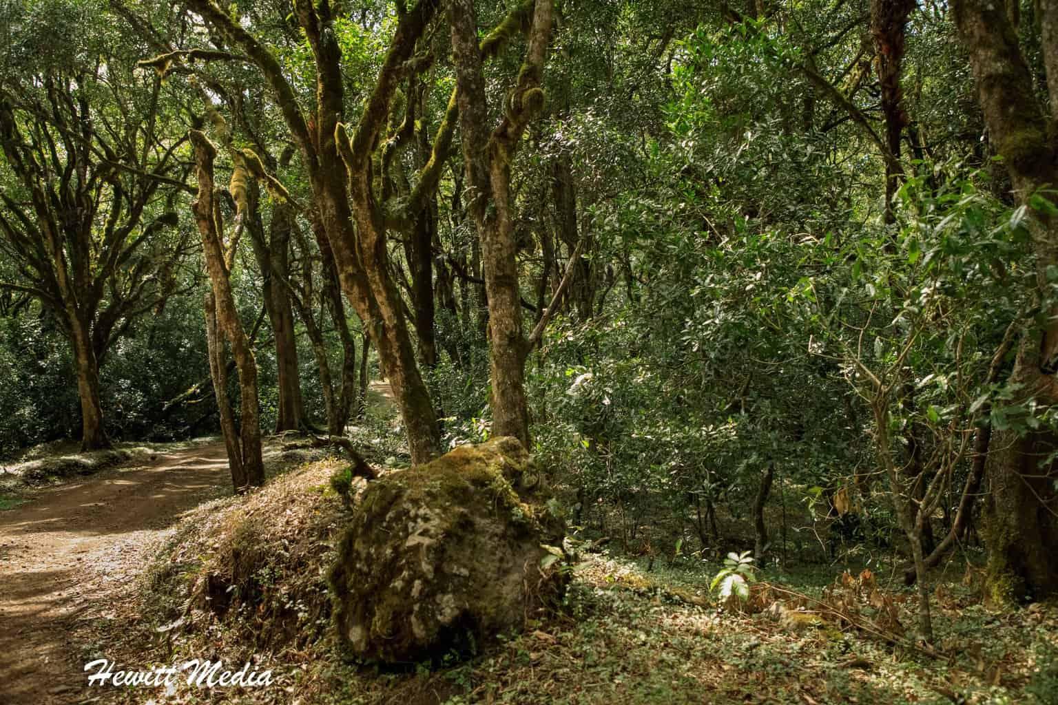Forest inside Arusha National Park