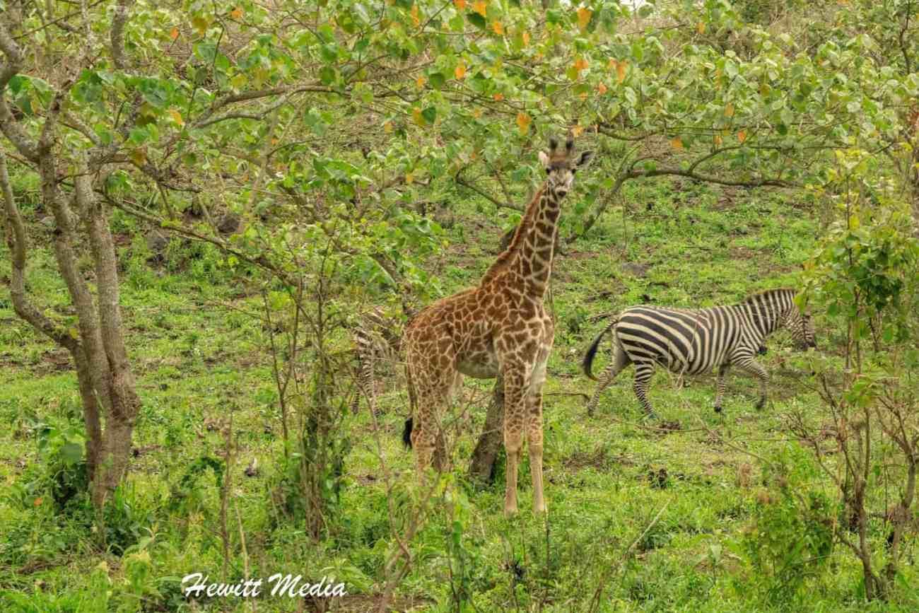 Arusha National Park-4227