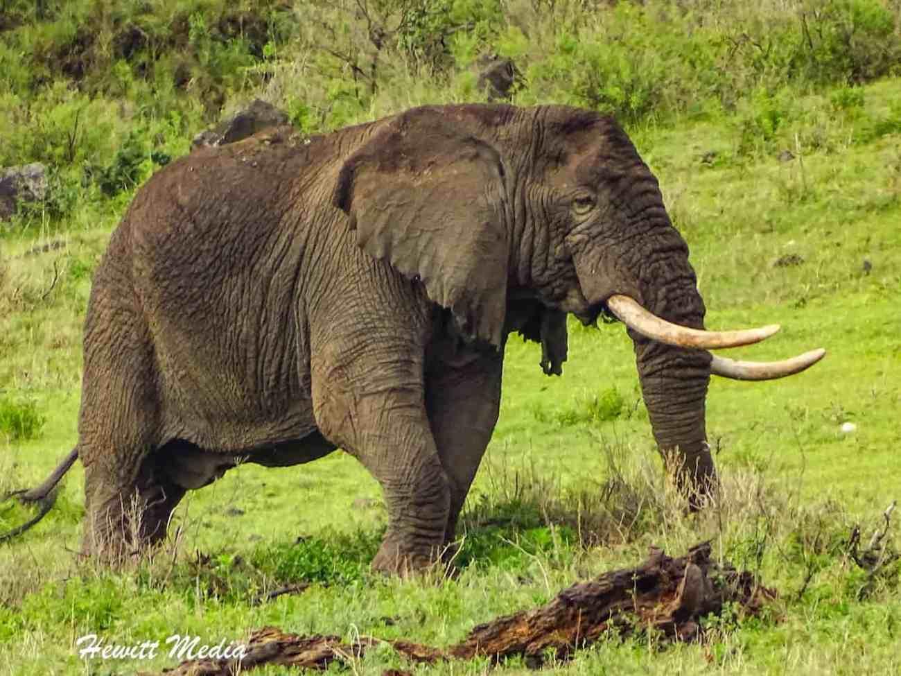 Ngorongoro Crater-04855