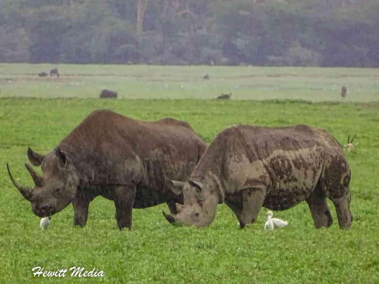 Ngorongoro Crater-05164