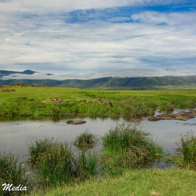 A view of hippos escaping the heat in the hippo pool inside the Ngorongoro Crater
