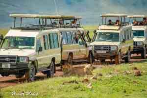 The Ultimate Tanzania Safari Itinerary