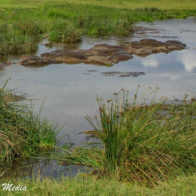 The hippo pool inside the Ngorongoro Crater
