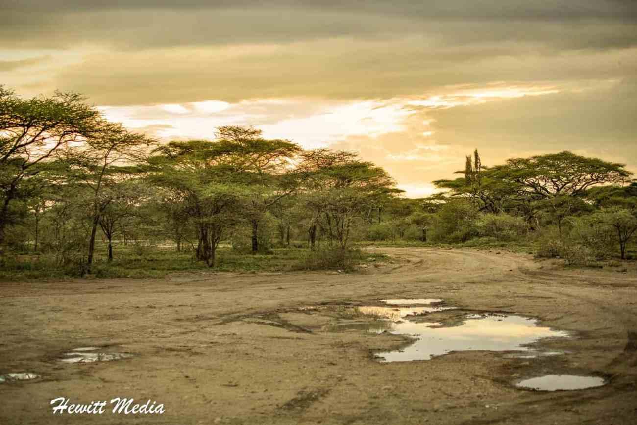 Serengeti-1416