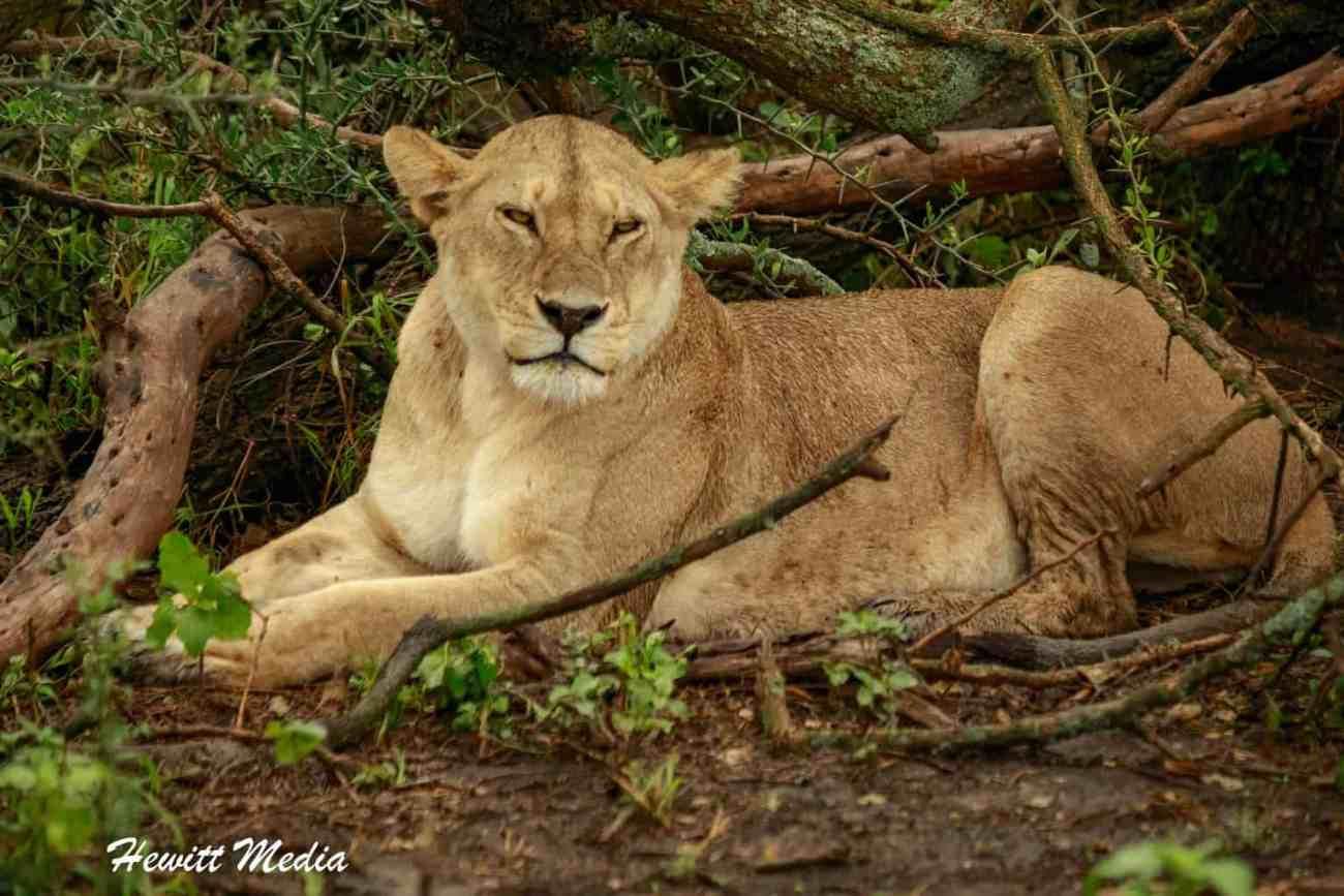 Serengeti-1607