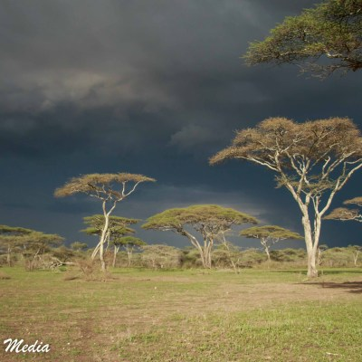 Thunderstorm approaches in the Serengeti National Park