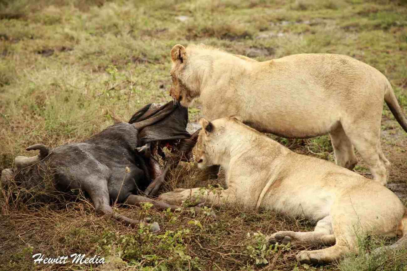 Serengeti-1704