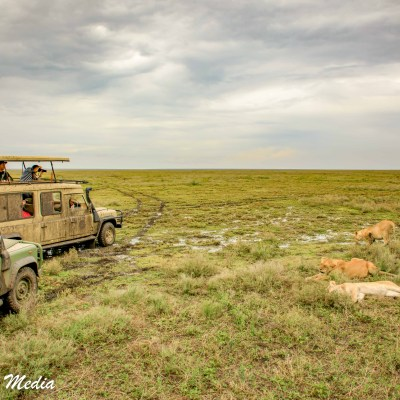 Watching lions resting in the Serengeti National Park