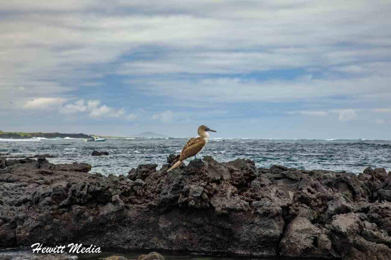 Galapagos-0057.jpg