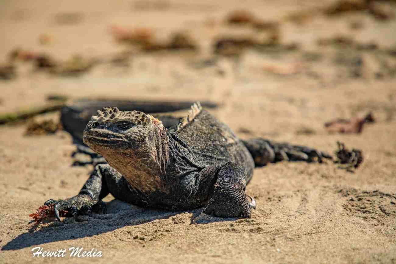 Galapagos-9403.jpg