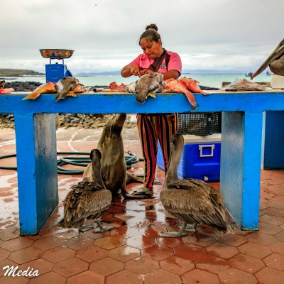 The Fish Market near Puerto Ayora on Santa Cruz Island.