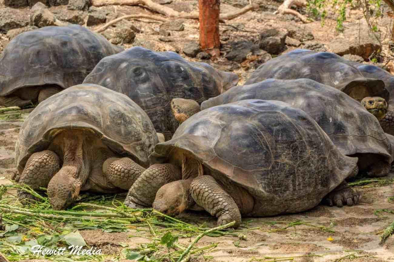 Galapagos-0251.jpg