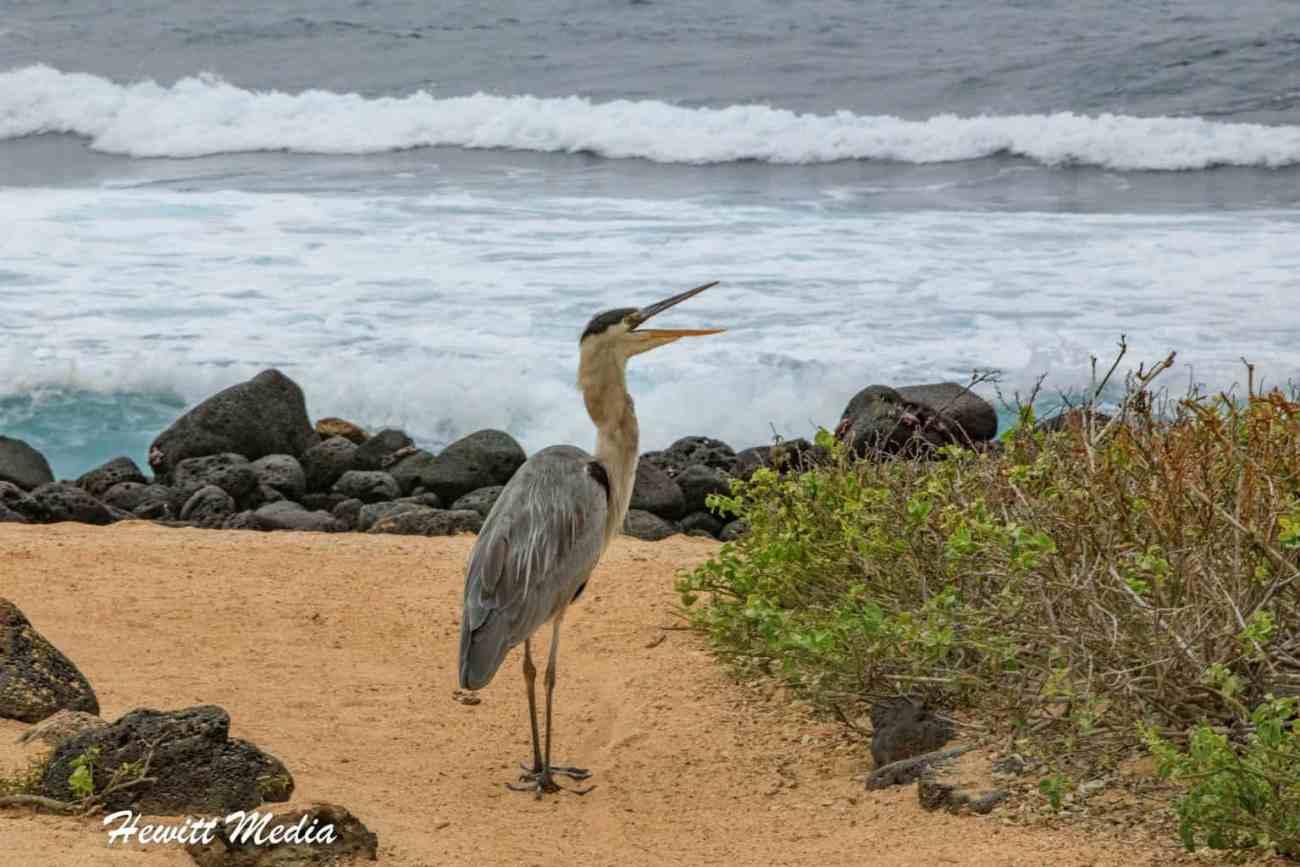 Galapagos-0332.jpg