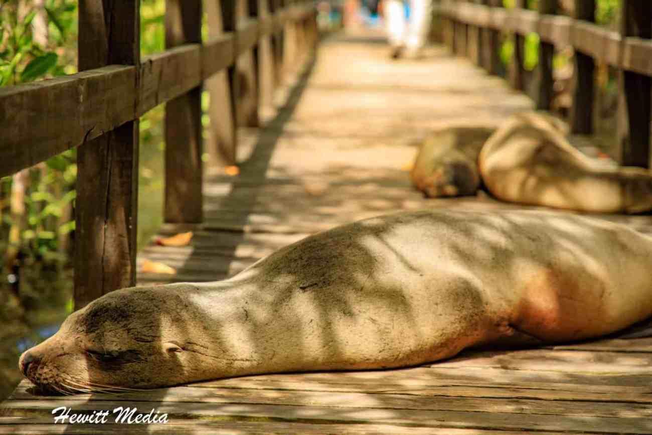 Galapagos-9380.jpg