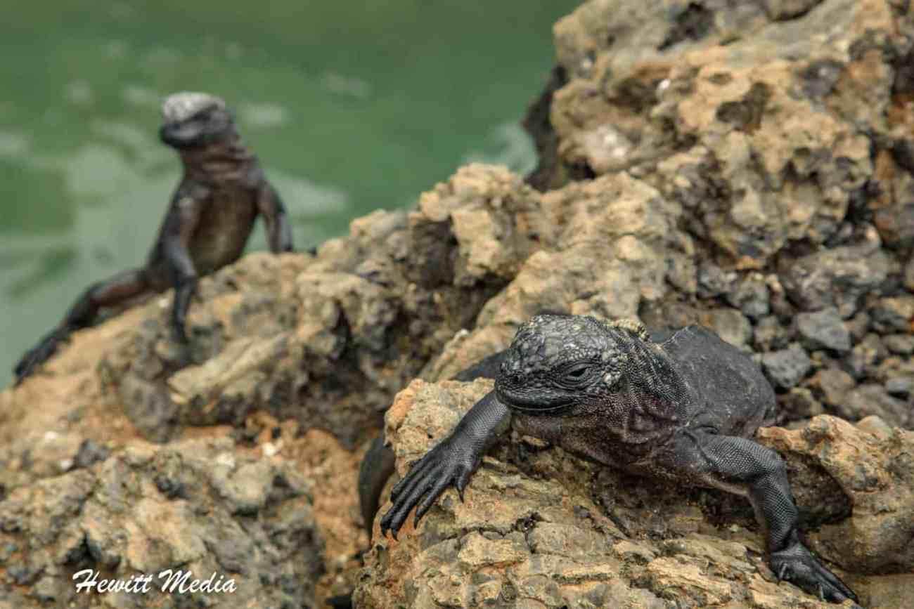 Galapagos-9625.jpg