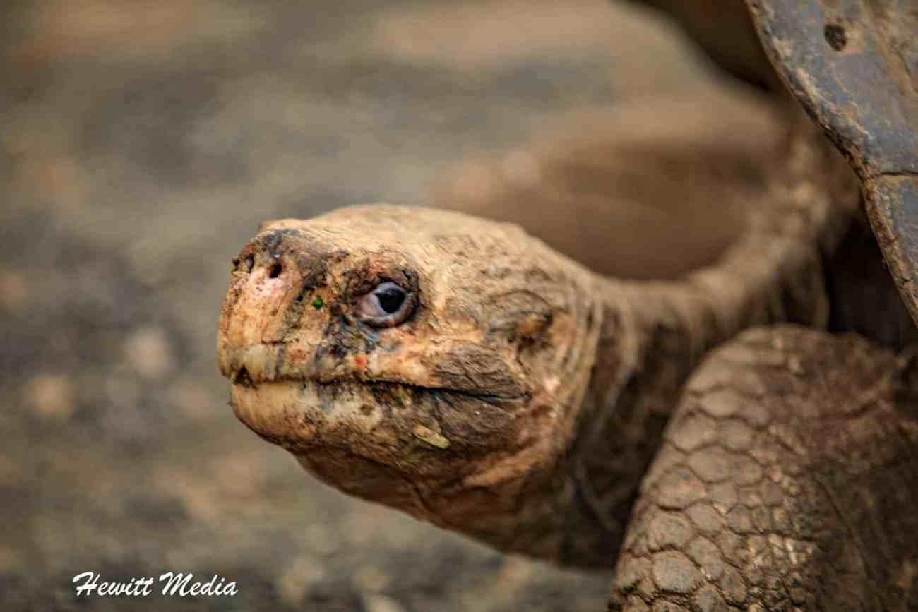 Galapagos-9835.jpg