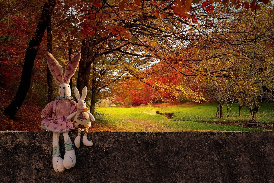 rabbits-1874090_960_720.jpg