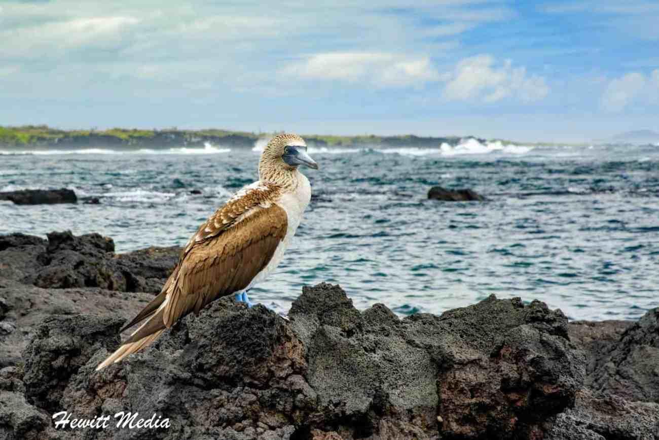 Galapagos-0068.jpg