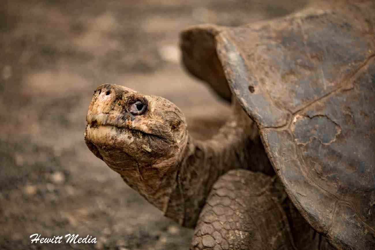 Galapagos-9834.jpg