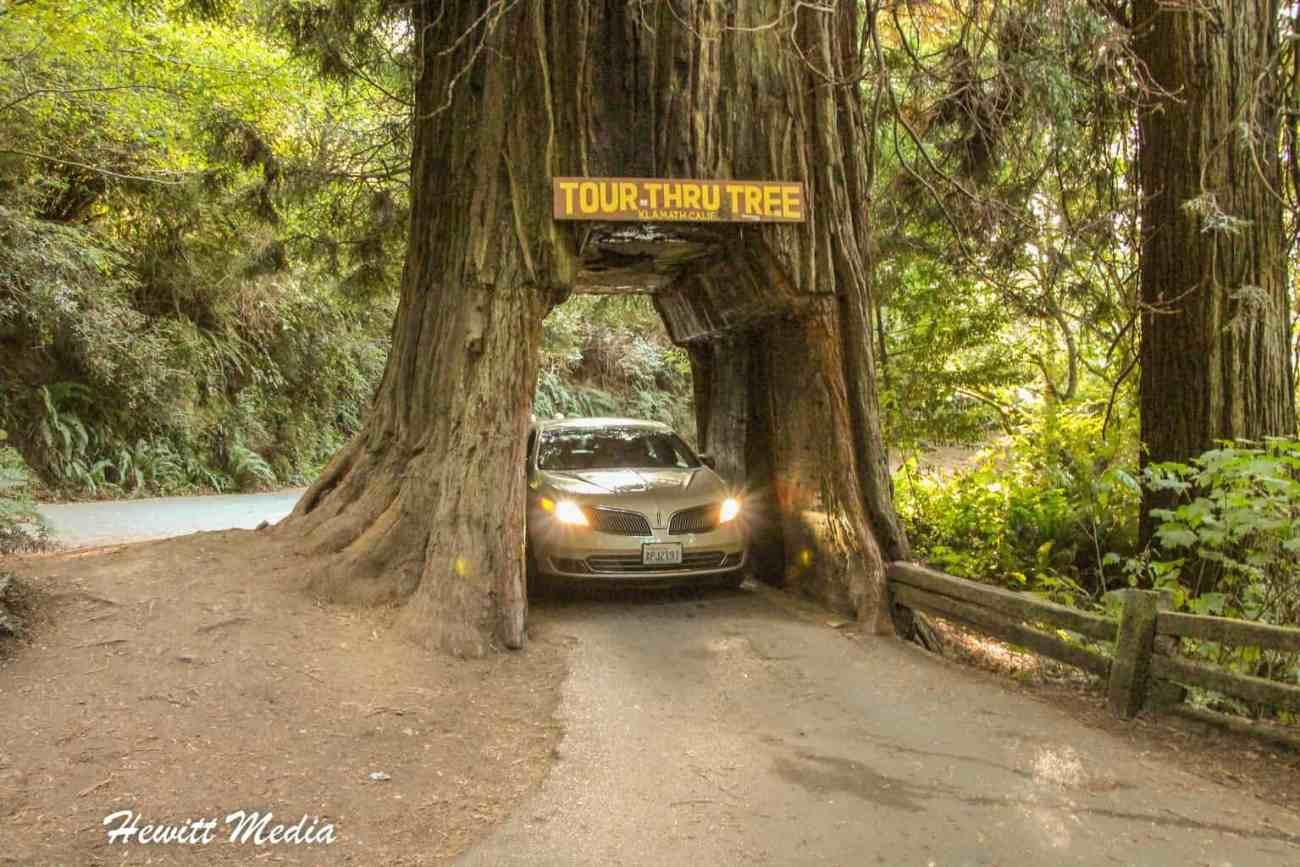 Redwood-5564.jpg