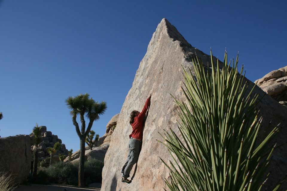 Joshua Tree Climb.jpg