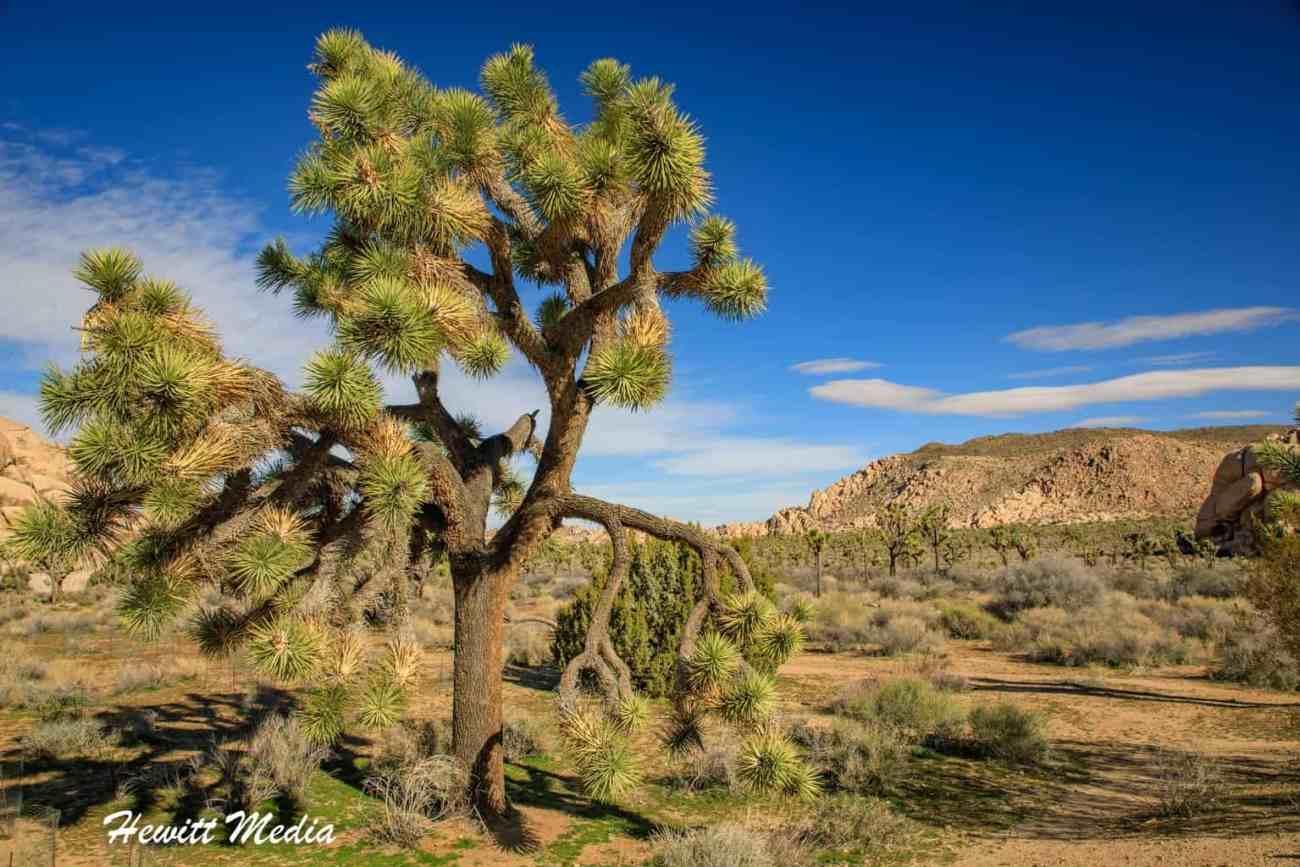 Joshua Tree National Park-1124