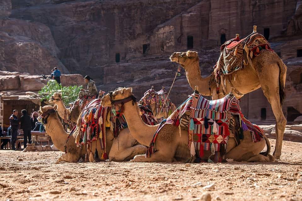 Petra Camel.jpg