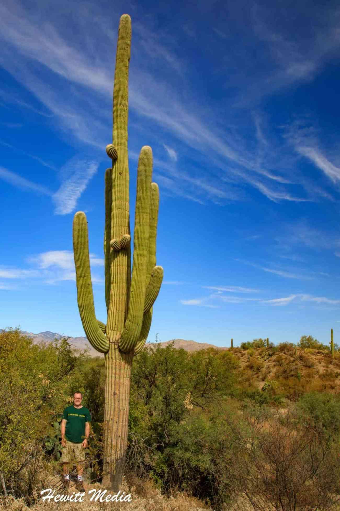 Saguaro National Park-5982